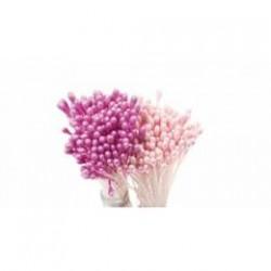 Pistile flori
