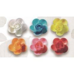 Trandafiri vafa mari